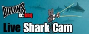 Dillon's KC BBQ Lake and Zoo Shark Cam!